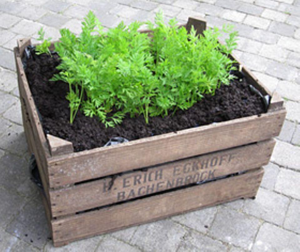 Pflanzen: Urban Gardening