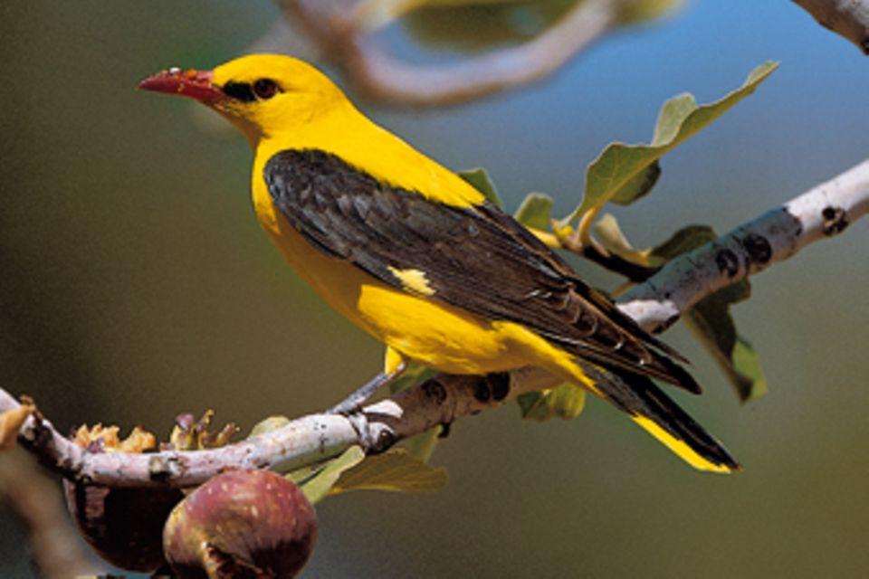 Tierwelt: Vögel