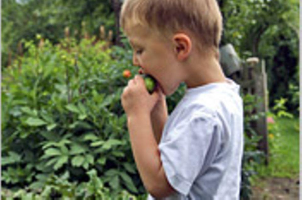 """""""Wenn Kinder gärtnern, essen sie plötzlich auch Gemüse"""""""