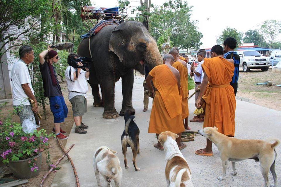 Mahout Non Yamdee und Elefantendame Poon Thap beim Besuch im Tempel - das GEO-TV-Team in Aktion
