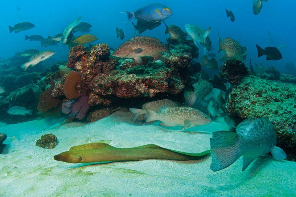 MEERESSCHUTZ: Der Meeresnationalpark Cabo Pulmo vor der mexikanischen Halbinsel Baja California erlebte eine spektakuläre Erholung, nachdem man 1999 die Fischerei verboten hatte