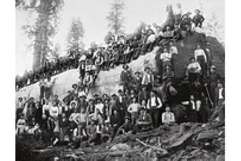 1898 - 1919: Essay: Debüt auf der Weltbühne