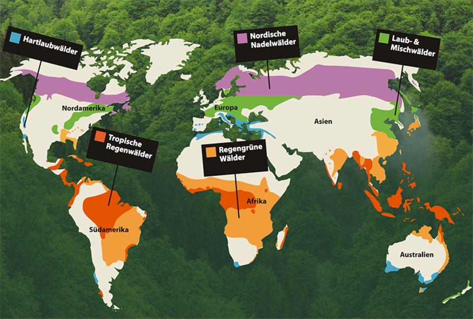 Botanik: Grob lassen sich die Wälder der Welt in fünf Gruppen aufteilen
