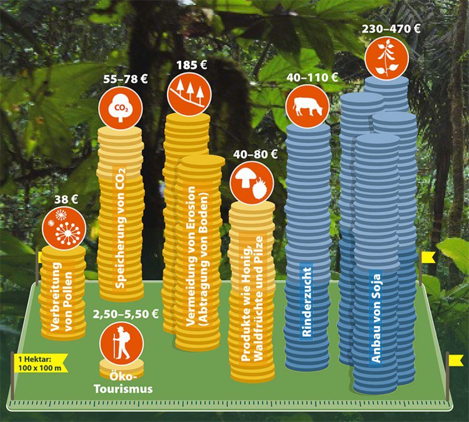 Botanik: Schon auf einem Hektar Regenwald lassen sich bis zu 470 Euro verdienen