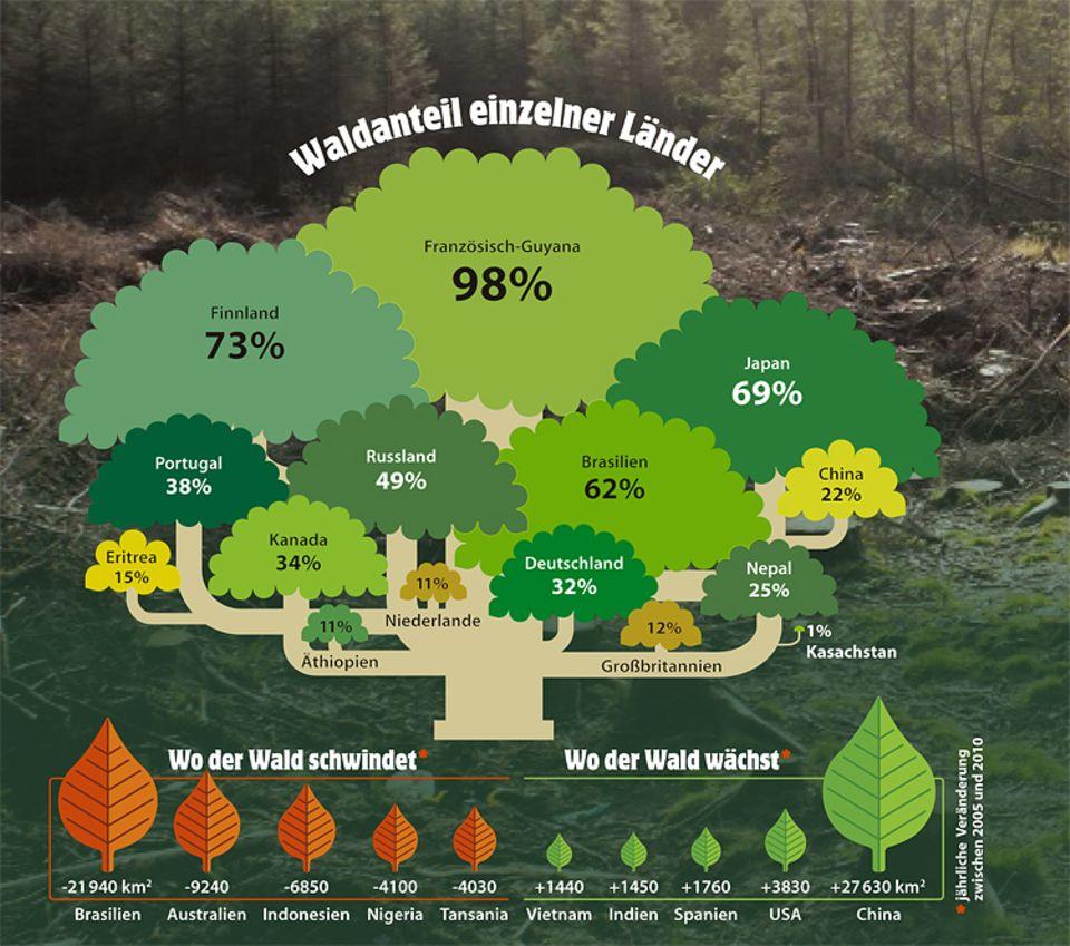 Botanik: Noch immer ist unsere Erde ein Waldplanet und ein Drittel der Landflächen von Bäumen bedeckt. Doch die Wälder schrumpfen