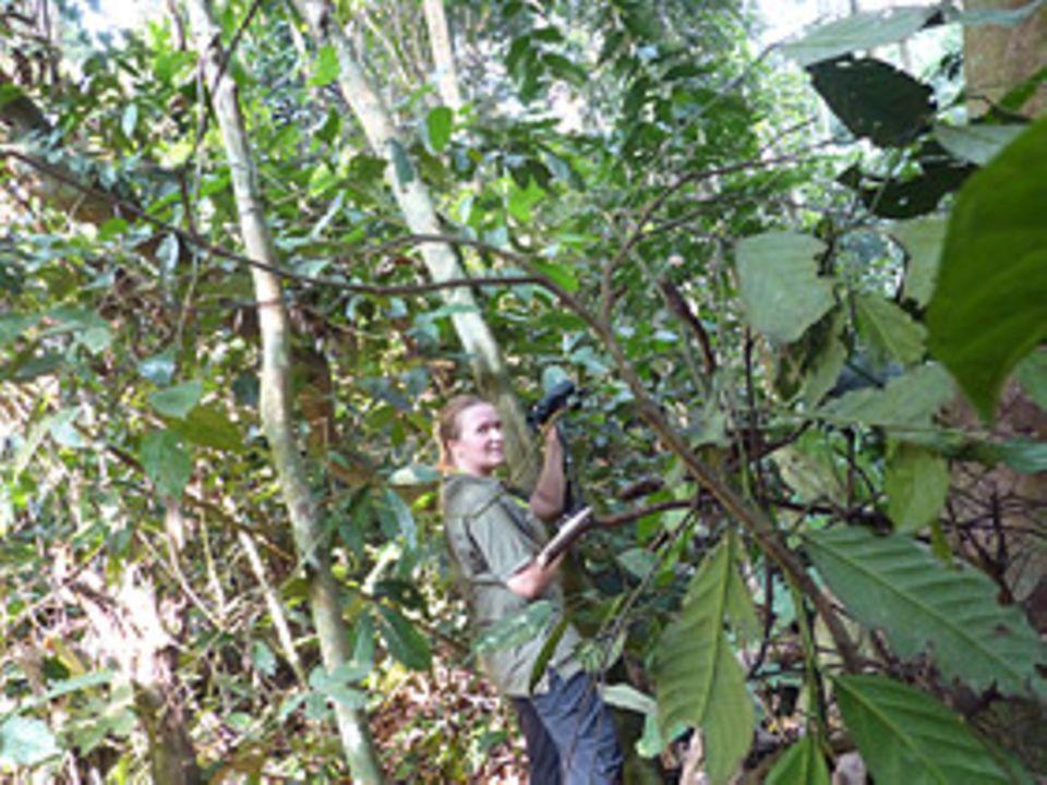 Beruf: Die Biologin Patra Lahann wollte eigentlich im Labor Krankheiten erforschen. Jetzt lebt sie im Urwalt im Kongo