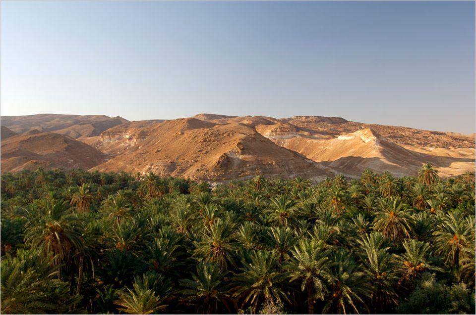 Tunesien: Hitzewellen? Noch mehr Dürre? In der kleinen Oase Hazoua in Tunesien sind die Menschen gut vorbereitet