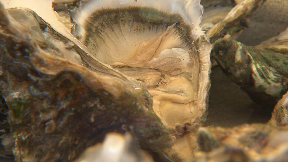 Die Weihnachtszeit ist in Frankreich untrennbar mit dem Austernschlürfen verbunden