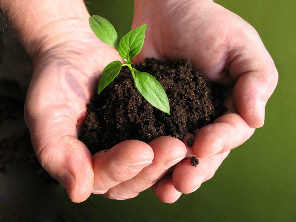 Redewendung: Beim Gärtnern werden die Hände schmutzig. Das weiß jeder, der schon mal im Blumenbeet gespielt hat