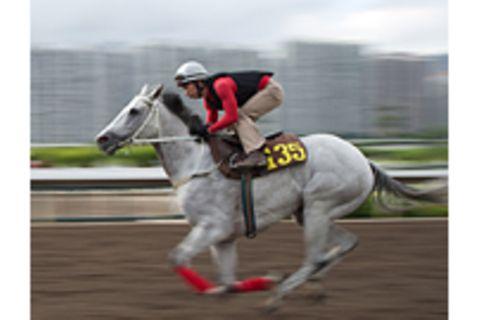 Hongkong Jockey Club: Das Rennpferd und die blauen Pumps