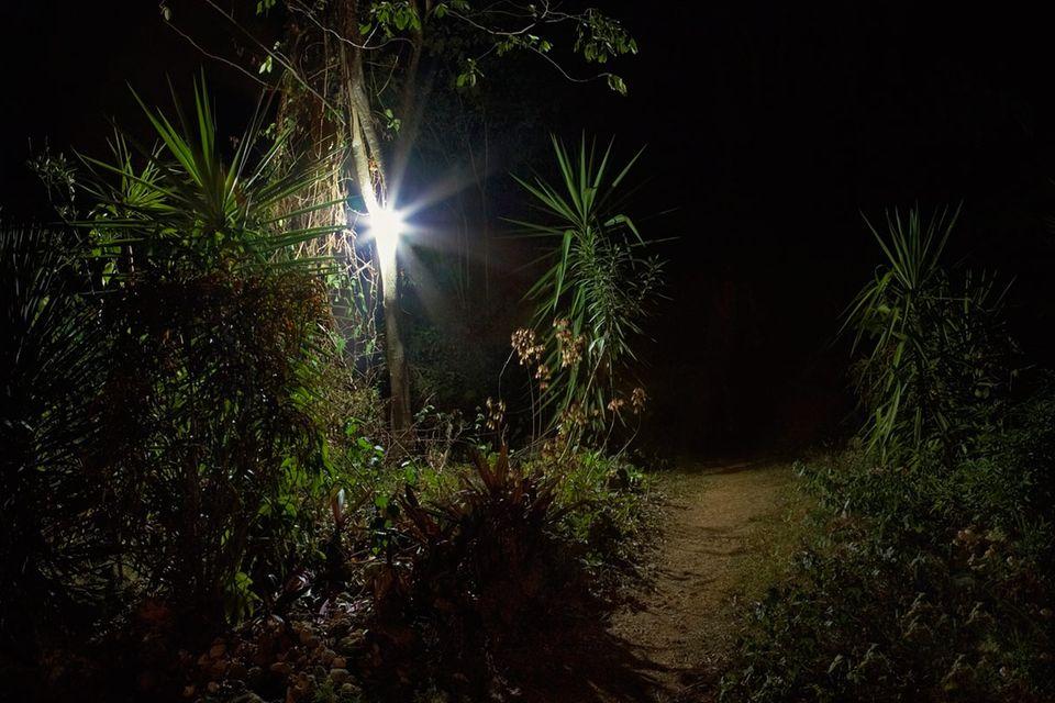 Lichtverschmutzung: Licht bremst Dschungel-Regeneration