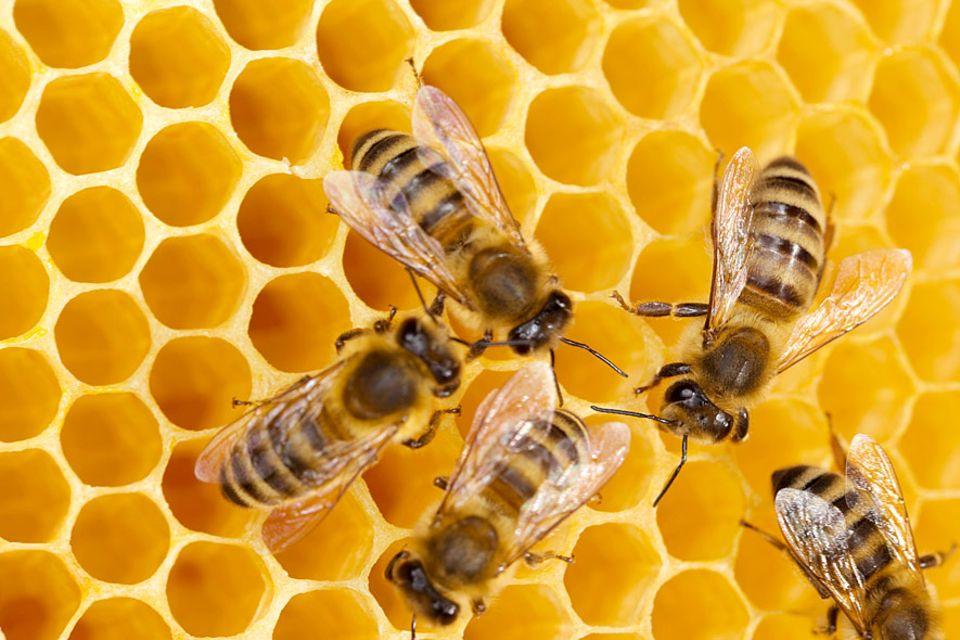 Wieso, weshalb, warum?: Honigbienen: Zwangsläufig Sechseckbewohner