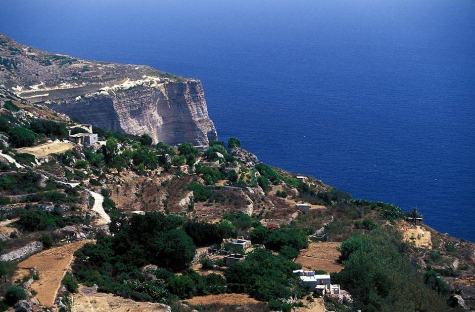 Reisetipps Malta: Wer Maltas Natur entdecken möchte, sollte sich die Tageswanderung entlang der Dingli Klippen nicht entgehen lassen