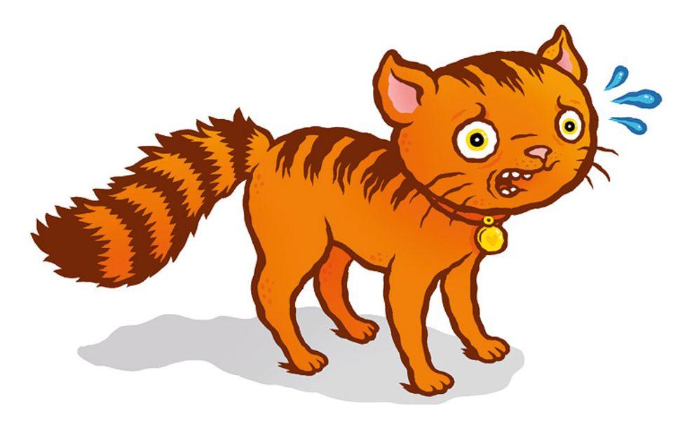 Tiersprache: Fühlen sich Katzen bedroht, sträuben sie ihren Schwanz, sodass er einer flauschigen Flaschenbürste gleicht