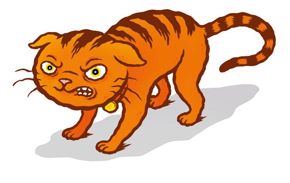 Tiersprache: Sind sie bereit zum Angriff, legen Katzen ihre Ohren an. So werden die empfindlichen Lauscher im Kampf nicht so leicht verletzt