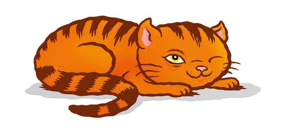 Tiersprache: Ein langer Blick, dann ein Zwinkern in Zeitlupe: Damit zeigen Katzen ihr stilles Einverständnis mit dem Gegenüber – auch mit uns Menschen.