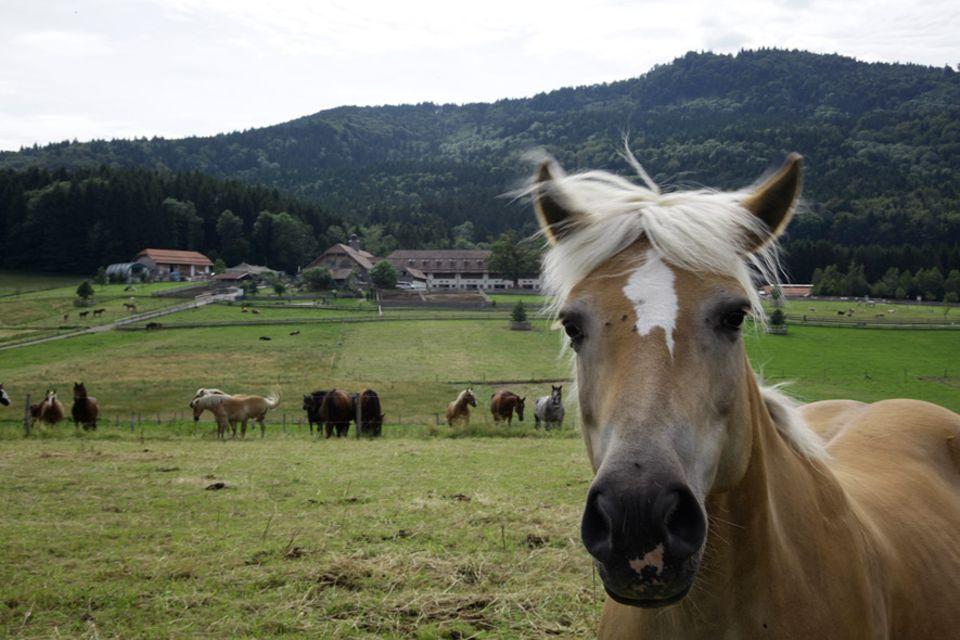 Auf Gut Aiderbichl Henndorf bei Salzburg leben 280 Pferde und Ponys sowie 33 Esel. Er war der erste von 25 Gnadenhöfen des Tierschutzprojekts