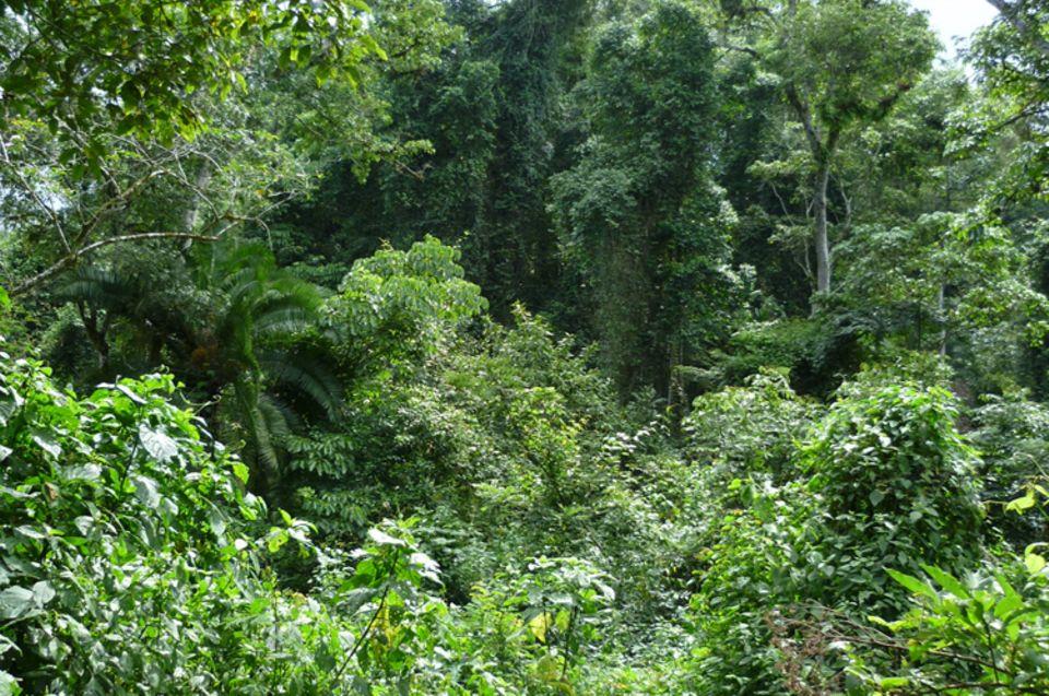 Unterstützung von Waldmanagement durch die ansässigen Gemeinden