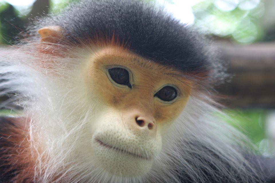 Schutz von Arten und deren Lebensräumen