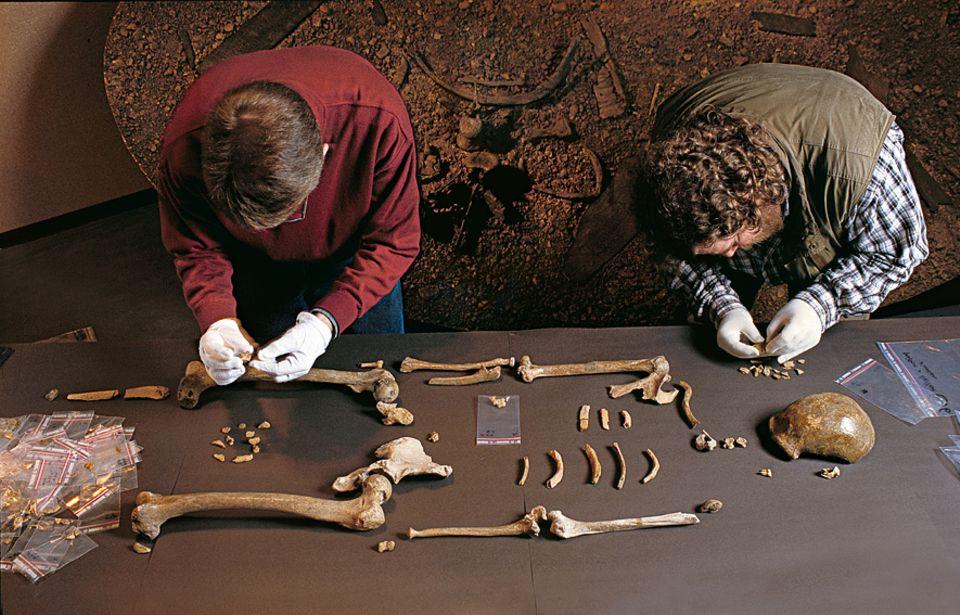 Neandertaler: KNOCHENPUZZLE: 140 Jahre nach der Entdeckung des allerersten Neandertaler-Skeletts finden die Archäologen Ralf Schmitz (l.) und Jürgen Thissen weitere Knochenfragmente und überprüfen, ob die Relikte zu dem bedeutenden Fossil passen