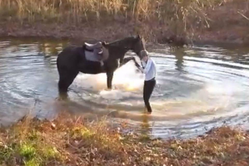 Video: Wenn ein Pferd entdeckt, dass Planschen Spaß macht