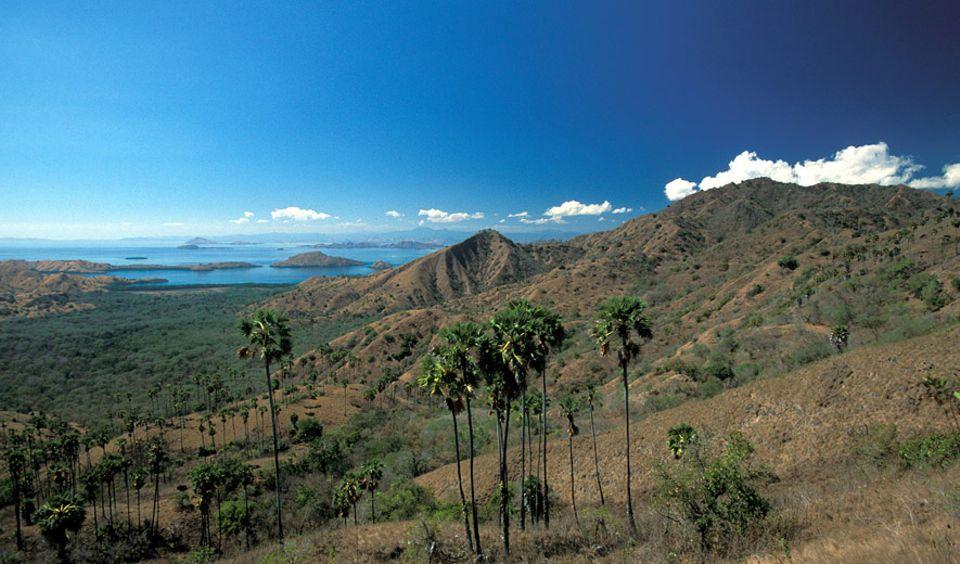 Komodowarane gibt es nur noch hier. Um ihren letzten Lebensraum zu sichern, wurde das Gebiet 1980 von der Republik Indonesien zum Nationalpark erklärt