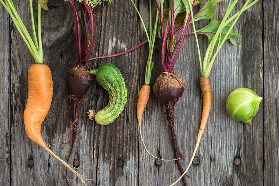 Weniger Verschwendung: Zu krumm, zu klein, zu fleckig: Nicht-Normgemüse Gemüse hat im Sortiment der Supermärkte bislang kaum eine Chance