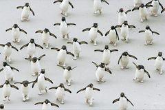 Fotoshow: Pinguine