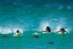 Fotoshow: Pinguine - Bild 2