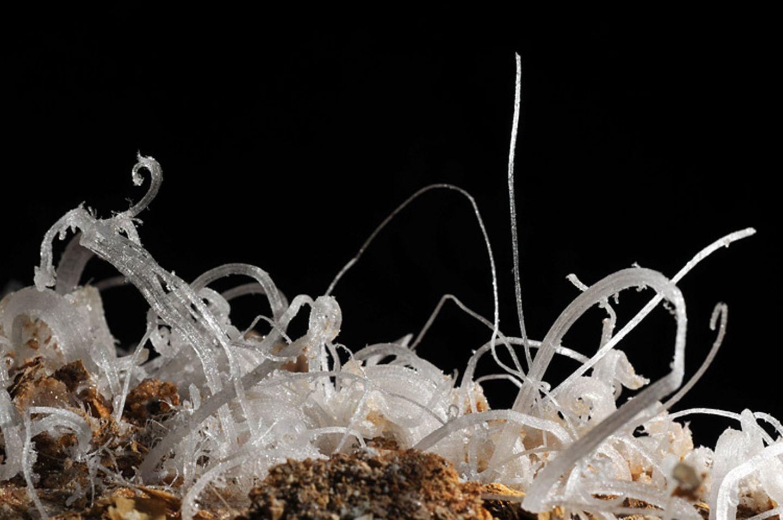 Fotogalerie: Höhlen - Forschung für die Medizin - Bild 7