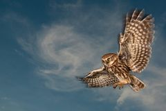 GDT Naturfotograf des Jahres