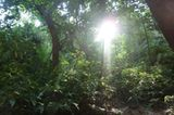 Jarlath (Matobo Hills): Jarlath (Matobo Hills) - Bild 9