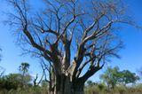Jarlath (Matobo Hills): Jarlath (Matobo Hills) - Bild 19