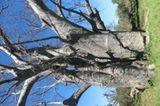 Jarlath (Matobo Hills): Jarlath (Matobo Hills) - Bild 20