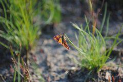 Insekten: Alles andere als ekelhaft