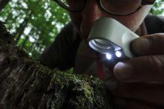 GEO-Tag der Artenvielfalt: Artenvielfalt im Pfälzerwald - Bild 4