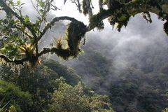 Naturschutz: Werde zum Waldretter! - Bild 2