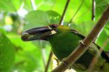 Naturschutz: Werde zum Waldretter! - Bild 5