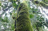 Naturschutz: Werde zum Waldretter! - Bild 12