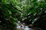 Naturschutz: Werde zum Waldretter! - Bild 13