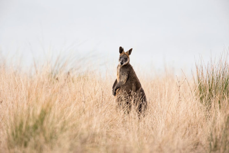 Tierparadies Phillip Island
