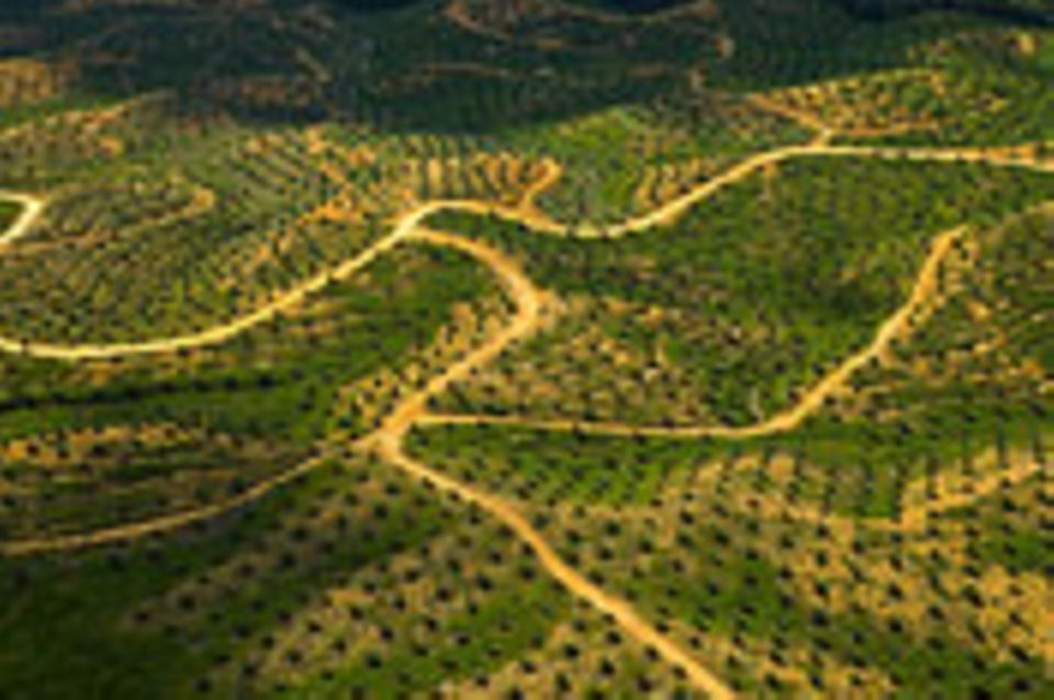 Lebensmittelproduktion: Palmöl statt Regenwald?