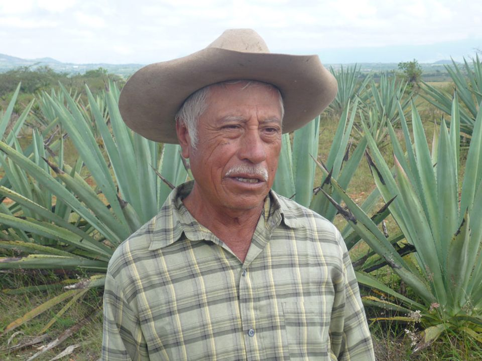 Der Mezcalero Don Felipe Cortez brennt den hochprozentigen Schnaps traditionell aus verschiedenen Agavensorten