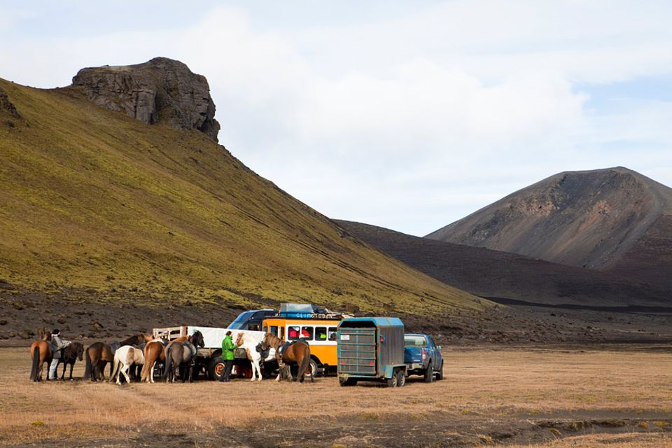 Geländegängige Versorgungsfahrzeuge und die kleinen aber zähen isländischen Pferde sind wichtigste Unterstützer beim alljährlichen Schafabtrieb