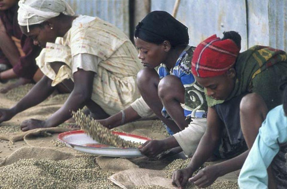 Von Hand kontrollieren und sortieren Frauen in einer Kaffee-Sammelstelle in Bonga die Bohnen