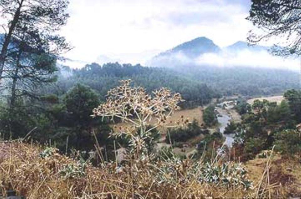 Dunstschleier spenden Feuchtigkeit für die reiche Pflanzenwelt der Sierra in Höhen bis 2000 Meter