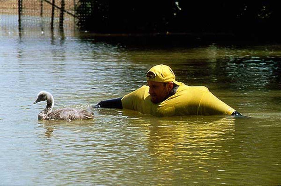 Geduld zu haben - auch im nassen Zustand - ist eine wichtige Tugend für menschliche Vogel-Ersatzeltern