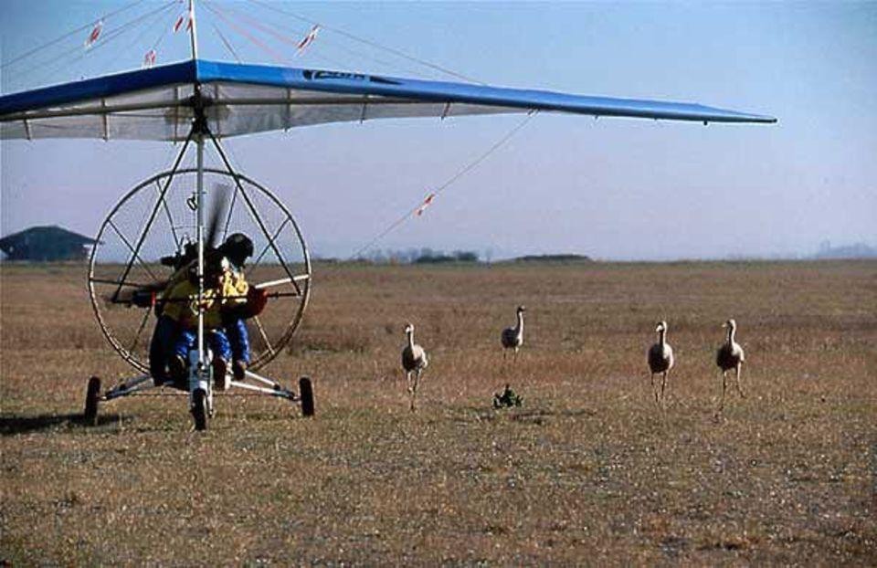 """Kurz vor dem Start: Der """"Vogelvater"""" wartet bis seine Kraniche neben dem Leichtflugzeug ihre Positionen eingenommen haben, um sich dann mit Ihnen in die Lüfte zu erheben"""