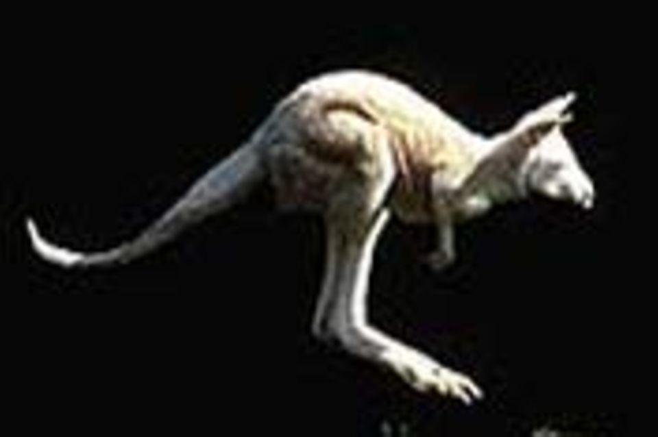 Albinos: Tierische Bleichgesichter