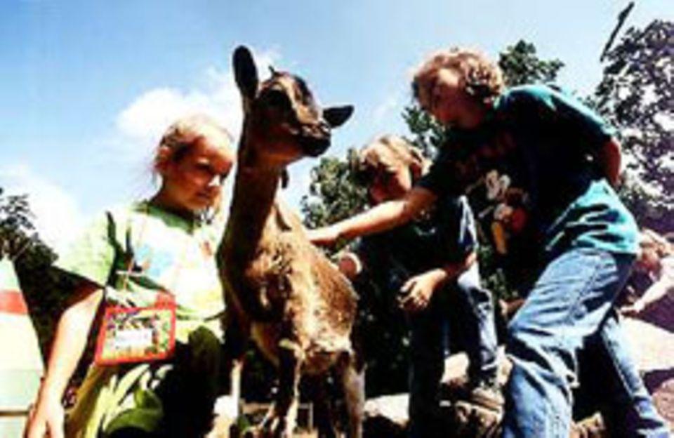 Auf Fellfühlung: Im Streichelzoo dürfen die kleinen Besucher mit Ziegen spielen